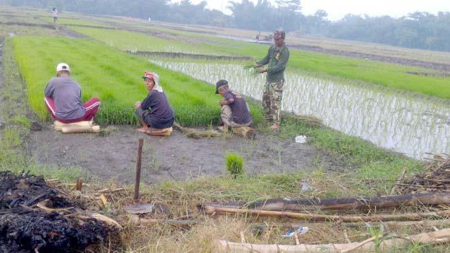 Babinsa Koramil 081514 Dlanggu Lakukan Pendampingan Tanam Padi Dan Benahi Irigasi Pertanian