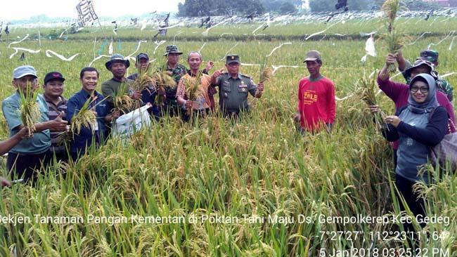 Staf Direktorat Tanaman Pangan Kementan RI Lakukan Pengubinan Di Wilayah Kodim 0815 Mojokerto