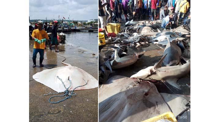 Harga Pasar Ikan Lokal Turun, Ikan Untuk Ekspor Naik