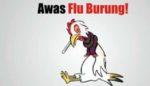 Masalah Penyakit Flu Burung di Kalangan Masyarakat