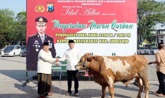 SALURKAN - Kapolresta Sidoarjo, Kombes Pol Zain Dwi Nugroho menyalurkan 17 ekor sapi dan 68 ekor kambing kurban untuk warga Sidoarjo di halaman Polresta Sidoarjo, Minggu (11/08/2019).
