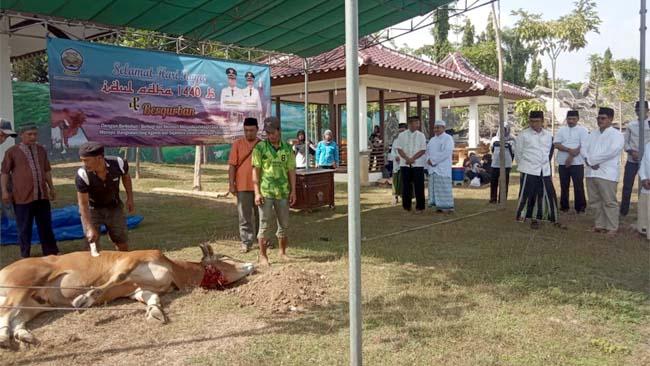 Bupati Bangkalan, R Abdul Latif Amin Imron Saat menyaksikan Penyembelihan Sapi di Halaman Pendopo Agung,(11/8/2019)