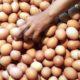 Harga Telur Ayam Anjlok ke Rp 16.000, Peternak di Lamongan Kelabakan
